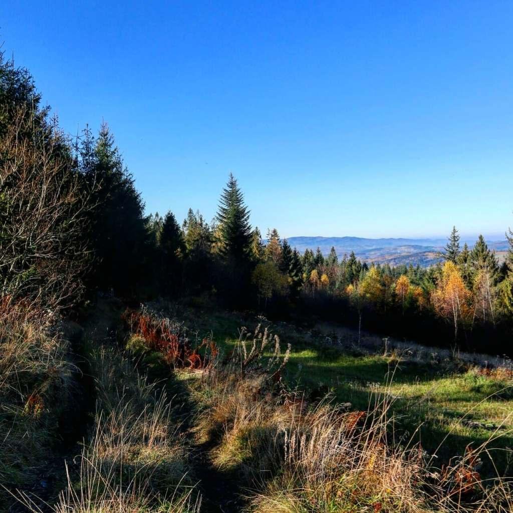 Widok z Koskowej Góry w kierunku Beskidu Żywieckiego